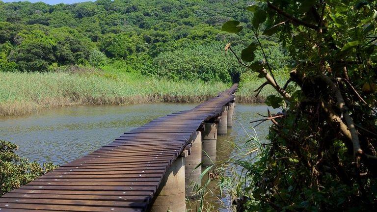 Umhlanga-Lagoon-Nature-Trail-70884