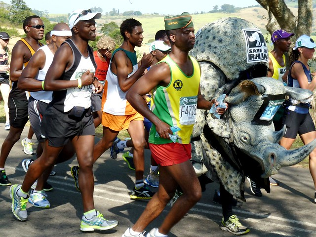 """Rhino costume runner in the Comrades UltramarathonVincent (Vinny) O'Neill, the """"fastest marathon rhino costume runner"""", is seen here at the 50 km mark in the Comrades ultra-marathon. He completed the run in the 8 kg costume to raise awareness about rhino poaching.The Comrades Marathon is an ultramarathon of approximately 89 km which is run annually in the KwaZulu-Natal Province of South Africa between the cities of Durban and Pietermaritzburg. It is the world's largest and oldest ultramarathon race.Photo credit: JMK via Wikimedia Commonscommons.wikimedia.org/wiki/File:Vincent_O%27Neill,_2013_C..."""